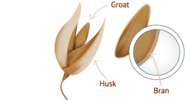 Once the husk is removed from the oat the 'groat' is left, it is the outer shell of the groat that contains the bran