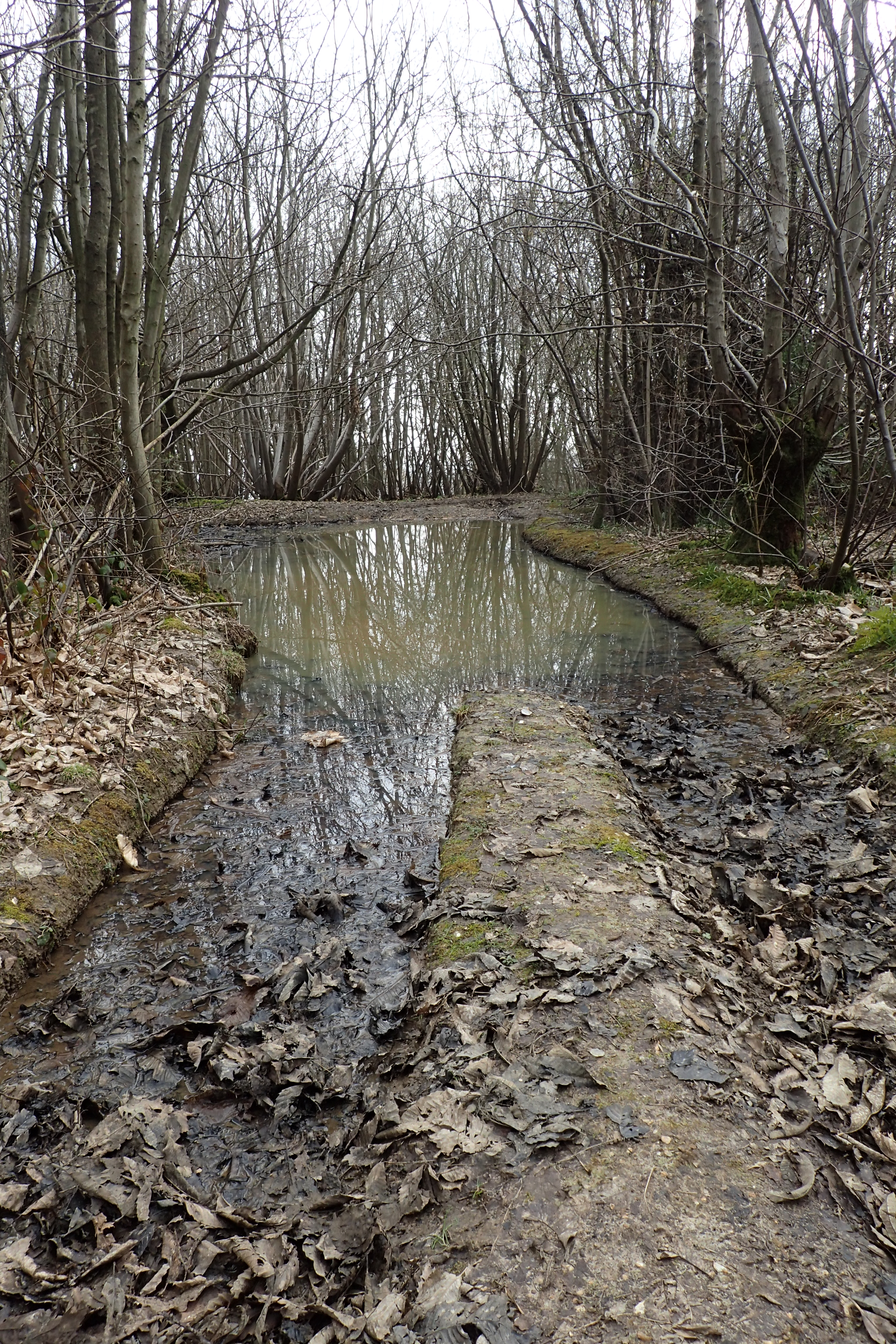 Flooded bridlepath in mid March