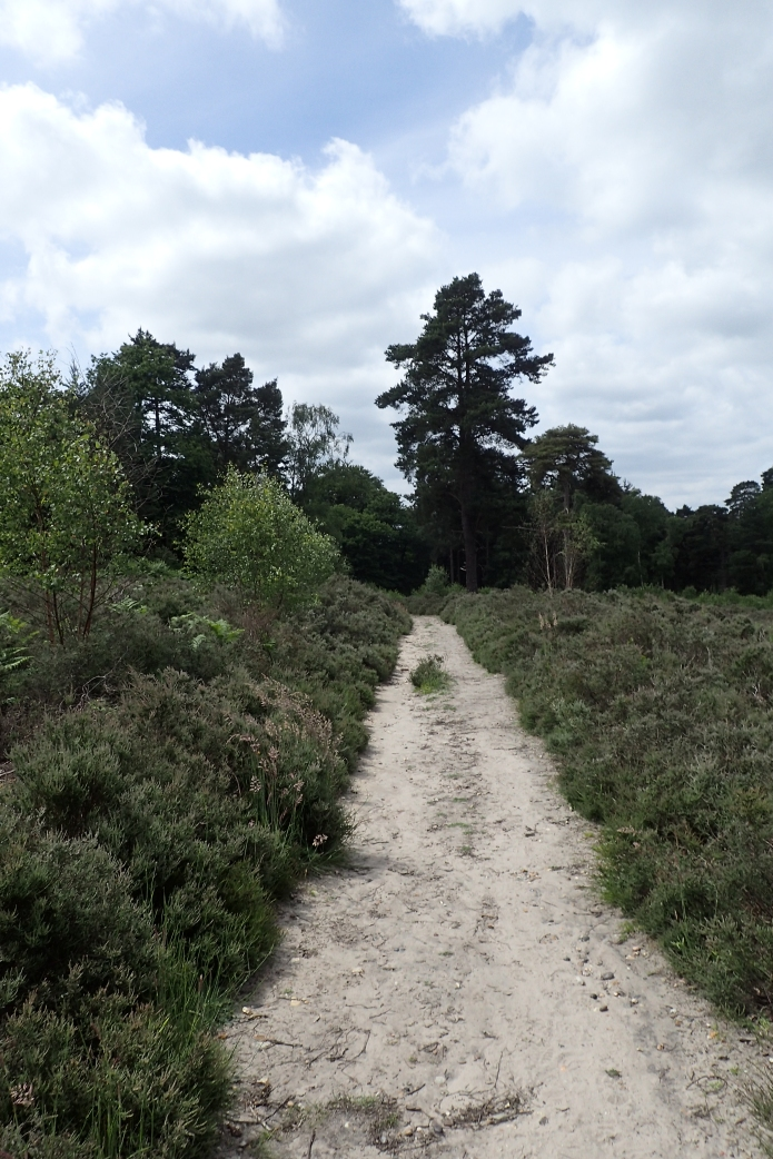 After the ricjh, loamy soils of Kent, the sandy heaths of Surrey were a surprising change