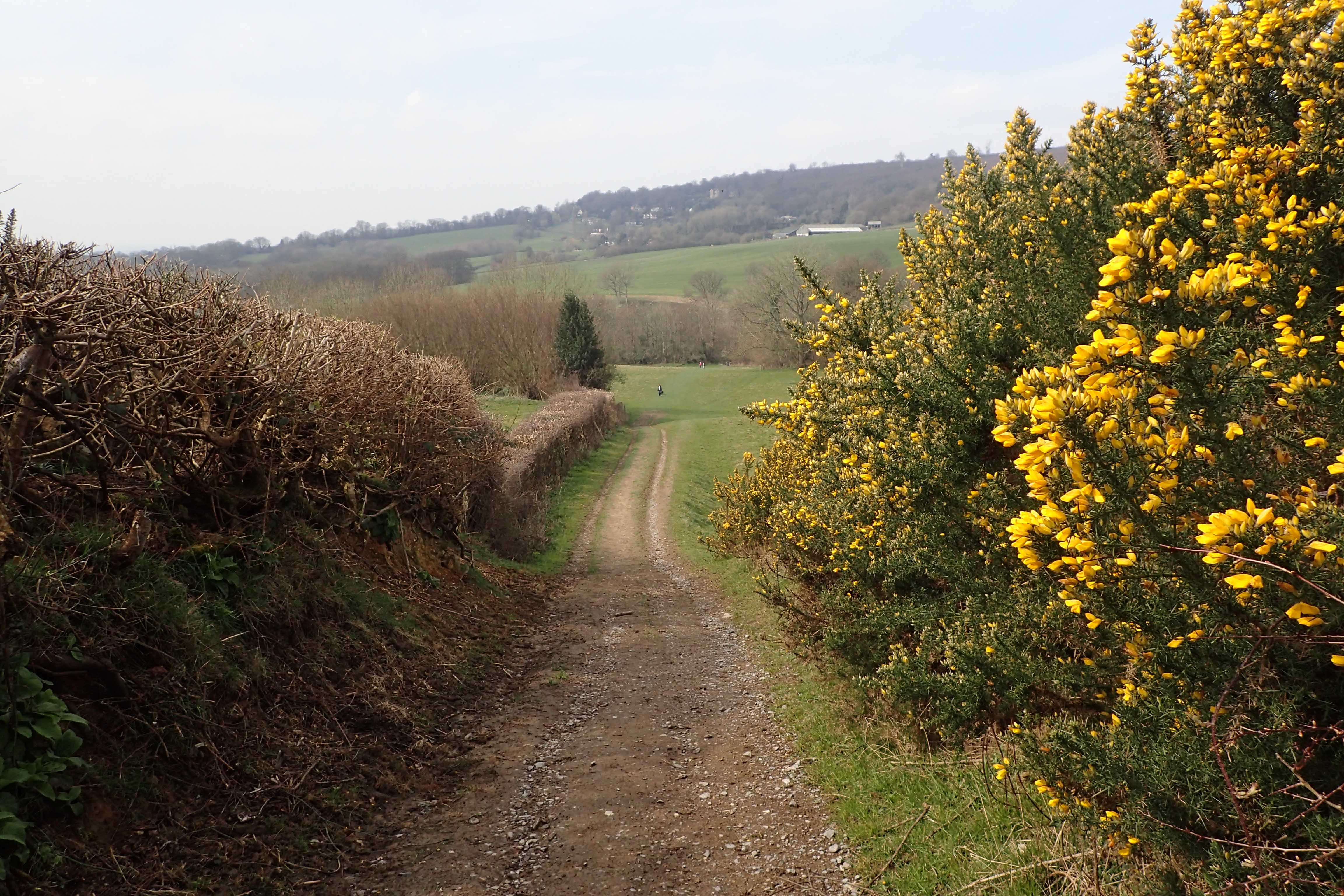 The way ahead beckons. Leaving Ide Hill in April 2016