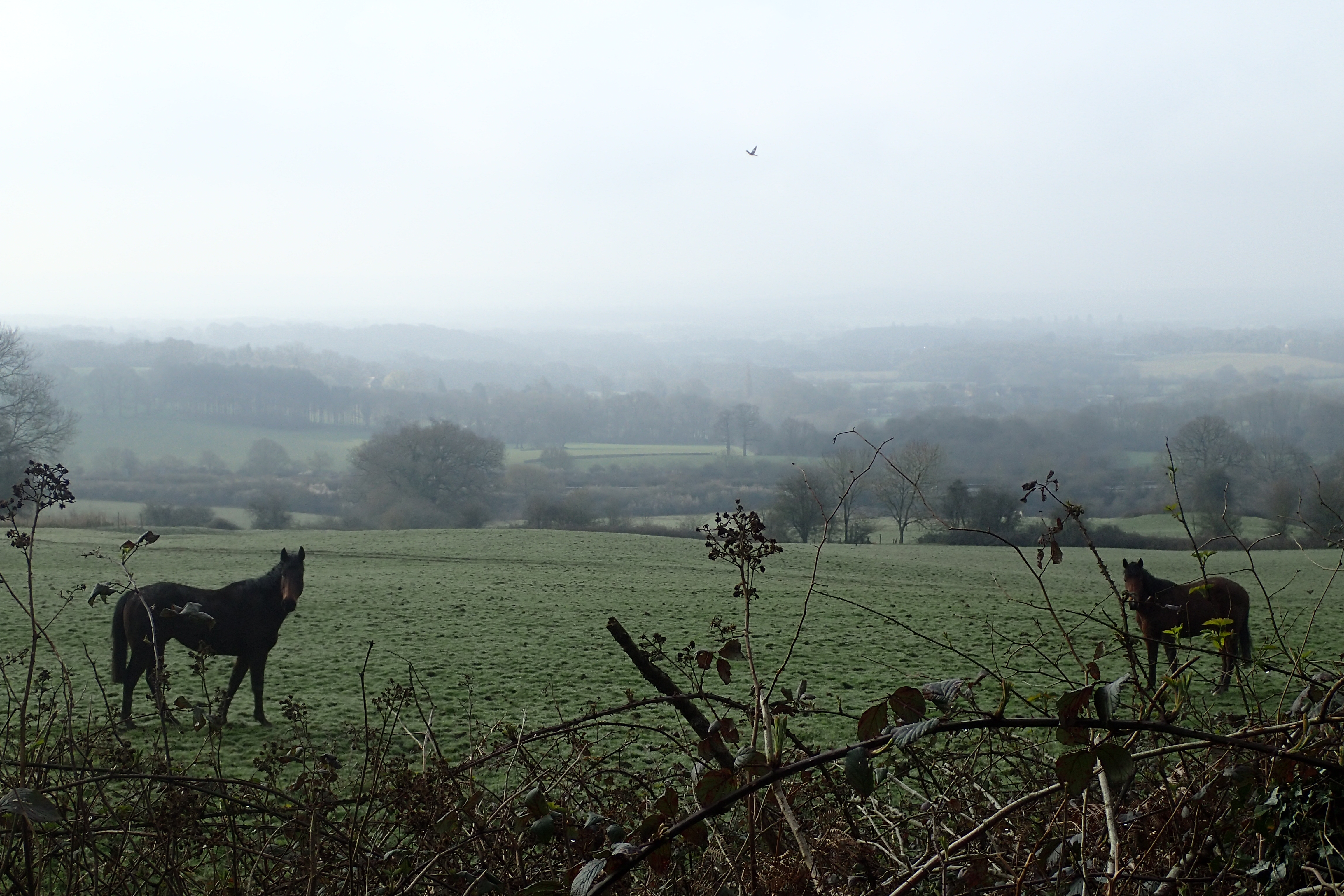 Views from the Greensand Way, just one established trail encountered on my route