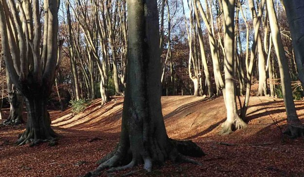 Ambresbury Banks are the remains of an Iron Age hill fort in the lovely Epping Forest, Essex