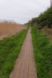 There were a couple of miles of board walks in all