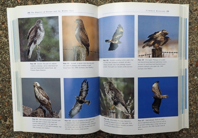 The Raptors of Europe and The Middle East by Dick Forsman is a momentous stepping stone in the publishing of effective field identification guides. Still containing good information on each species, the book is beginning to show its age with the photographs included