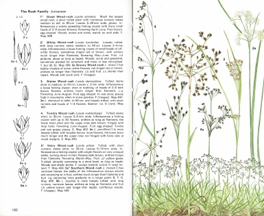 Sample pages from the Collins guide to Grasses, Sedges, Rushes and Ferns