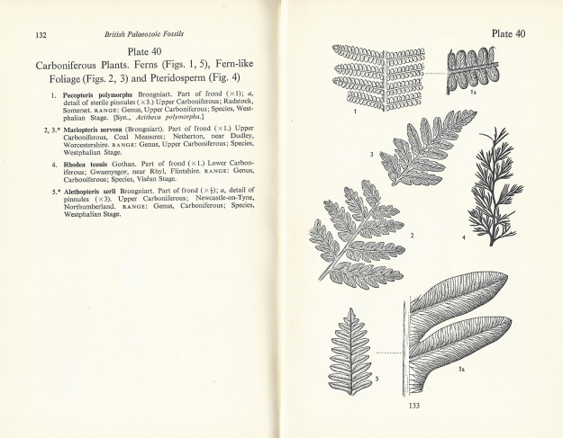 Two pages from British Palaeozoic Fossils