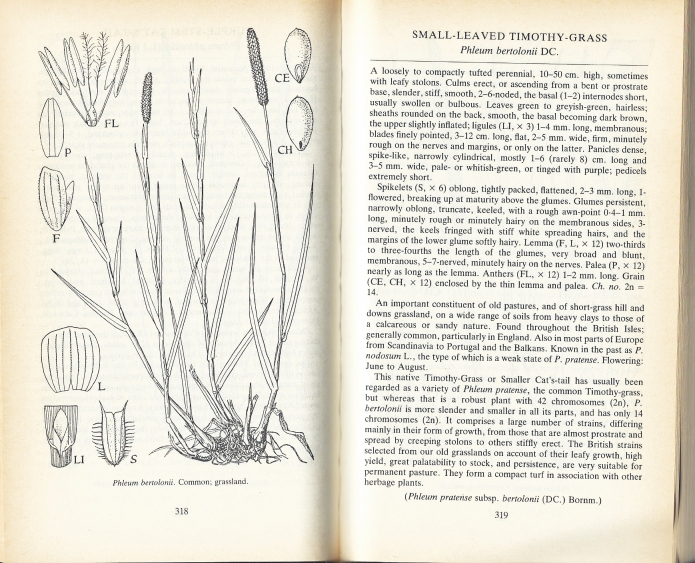 Charles Edward Hubbard specialised in the study of grasses and became Deputy Director of the Royal Botanic Garden, Kew. His Grasses volume has been the standard reference work for decades