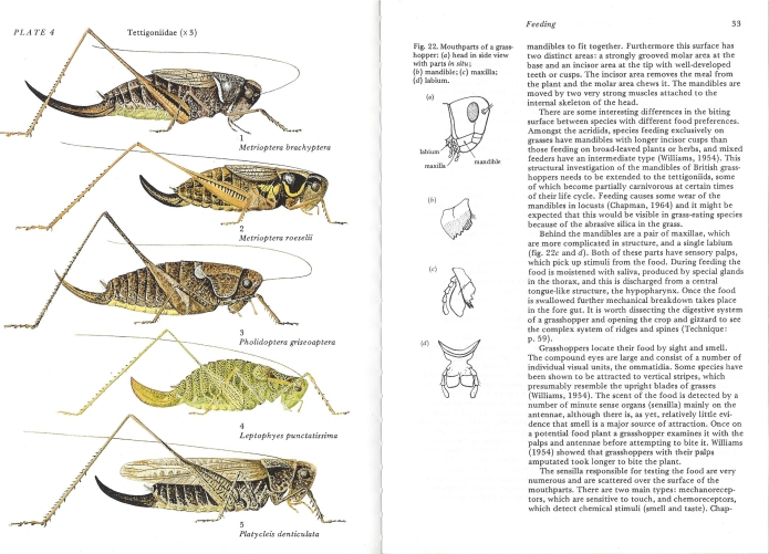 Sample pages from Naturalists' Handbook No. 4- Grasshoppers