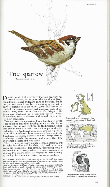 A page from the AA/Readers Digest book- The Birds of Britain