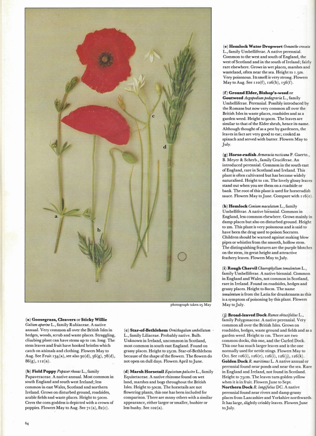 Roger Phillips illustrates his flowers in chronological flowering order, includes both English and botanical names, also a little background is included. See what he is included for this small group