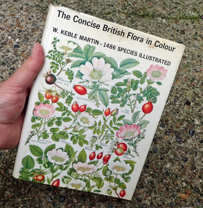 Keble Martin's Concise British Flora is an old book, sadly, some reprints reproduce his delicate, accurate and fine illustrations quite poorly. There is unlikely to be any other book that shows diagnostic features any better