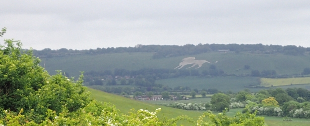 Reaching Ivinghoe Beacon on my final day on the Ridgeway, over my right shoulder could be seen the huge figure of the Whipsnade White Lion