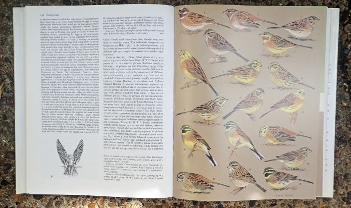 Pages from Birds of the Western Palearctic, Volume IX Buntings and New World Warblers