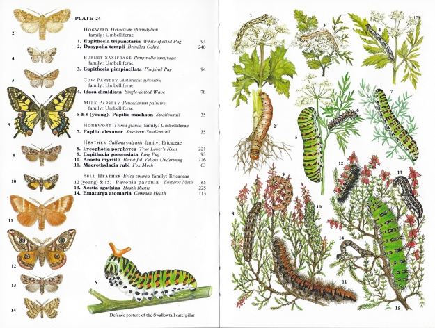 Collins Field Guide to Caterpillars is, I believe, the only field guide that groups caterpillars by their food plant, so a little knowledge on flora is useful