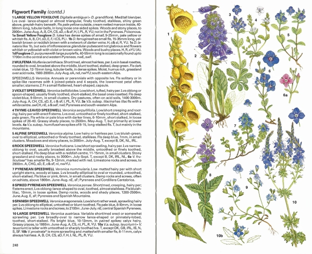 Sample pages from the Collins Field Guide to Alpine Flowers