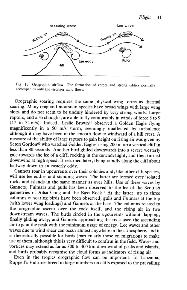 Norman Elkins succeeded in bringing together the relationship between birds, flight and weather in his book Weather and Bird Behaviour. This sample page looks at Orography- the enforced ascent of air over high ground