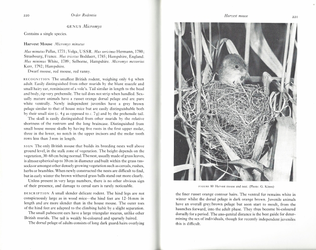 Part of the seven and a half pages that covers the Harvest Mouse in Great Britain