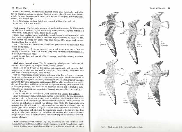 P J Grant looked at 31 species of gulls and their identification in his 352 page book on Gulls. This can be a difficult group to age and identify due to the complexities in immature plumage. This book went some way to addressing the difficulty