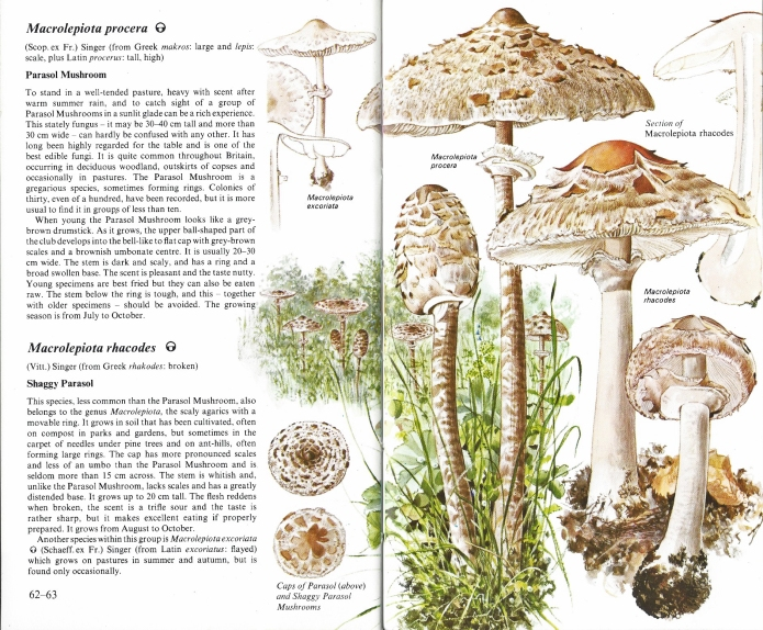 Two pages from volume 2 of the Penguin Nature Guides for Fungi.