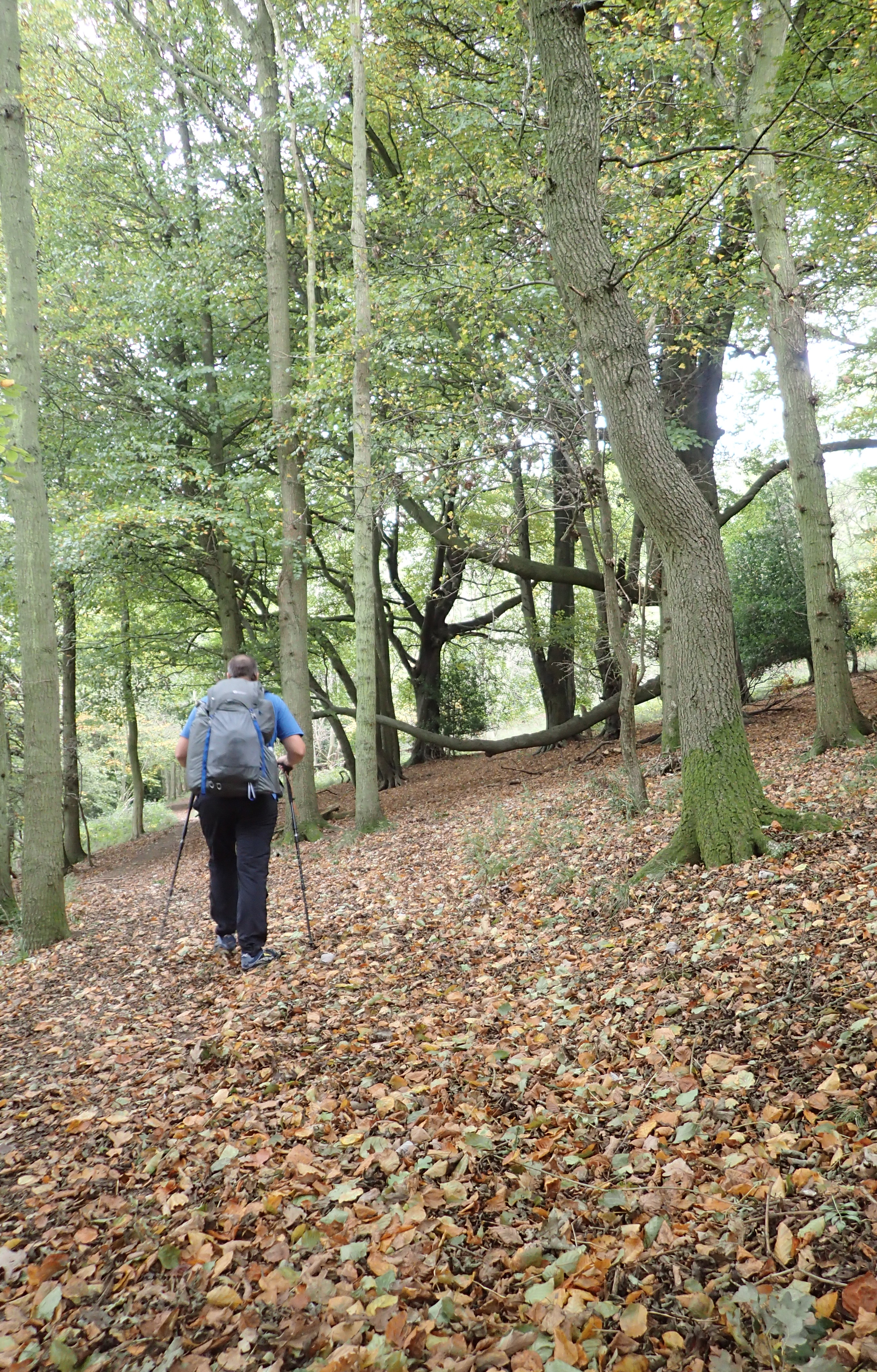 First days on the trail took occasional beautiful woodland. Easy walking with little gradient
