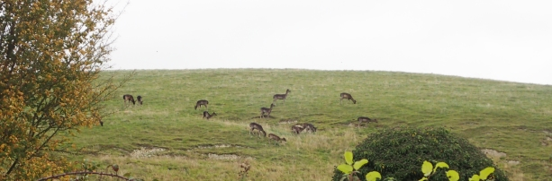 Deer were seen on every day, usually Muntjac, or Barking Deer which were seen in the hundreds, occasionally Fallow Deer
