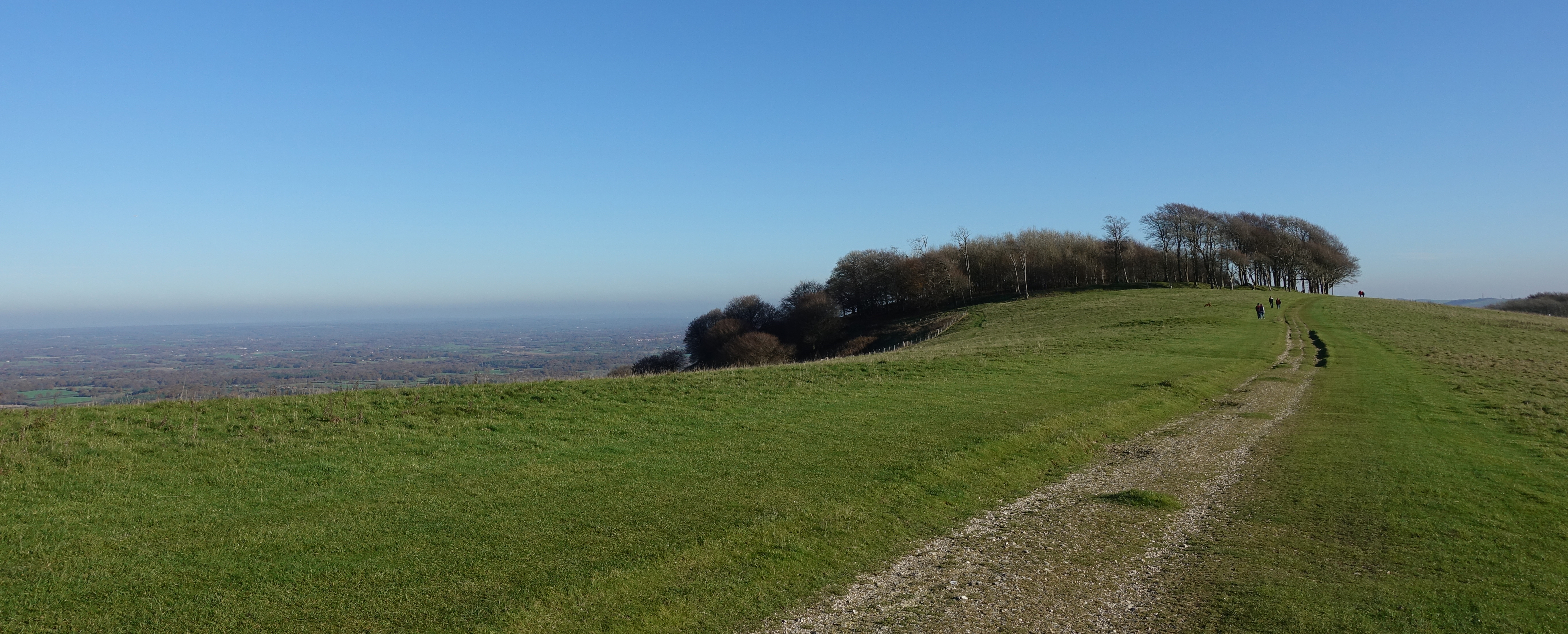 Approaching Chanctonbury Ring. A feature of the South Downs, it is visible for miles to the north and south. The original ring of trees, long since replaced, were planted on the site of a prehistoric hill fort