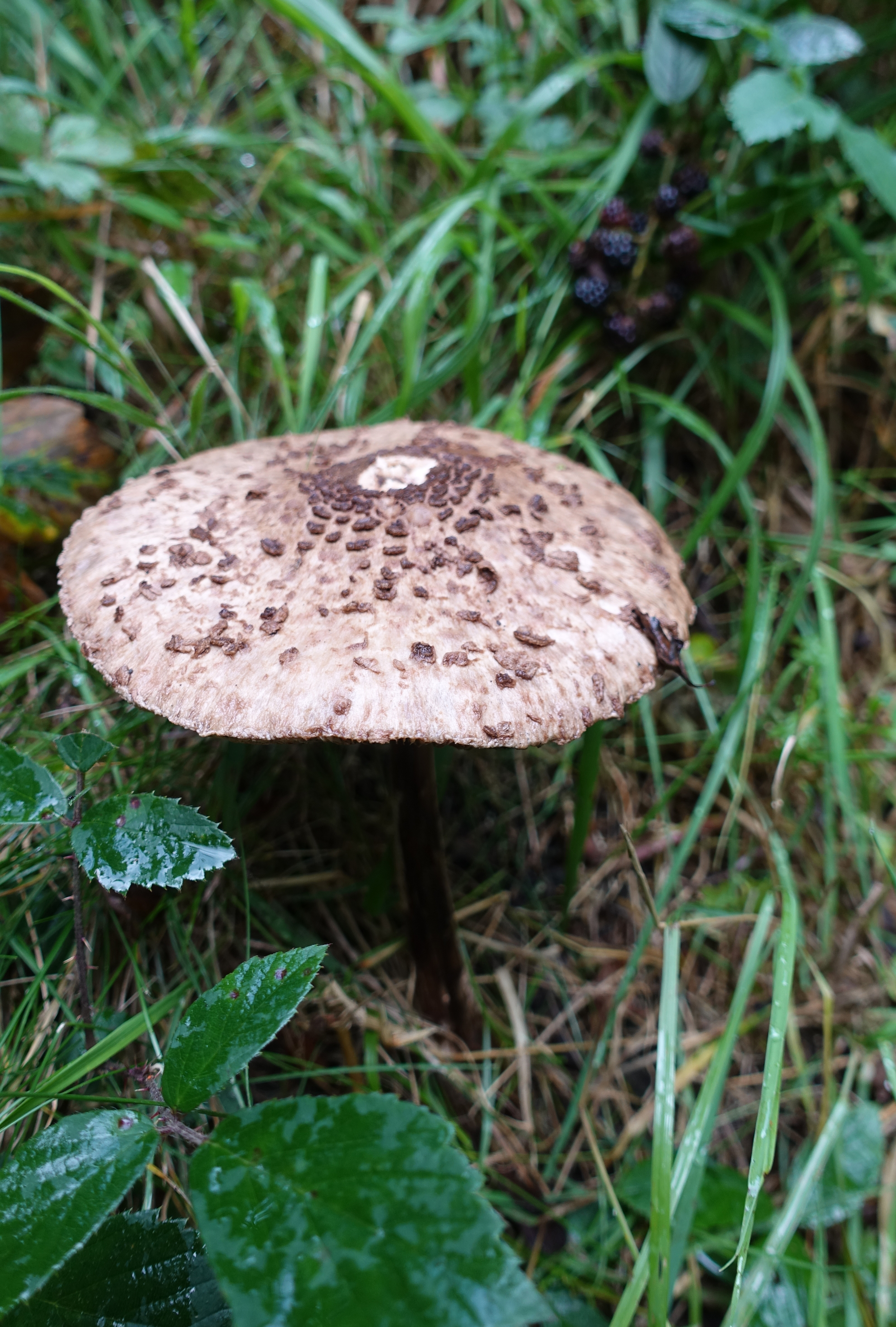 This was an autumn walk and fungi were much in evidence