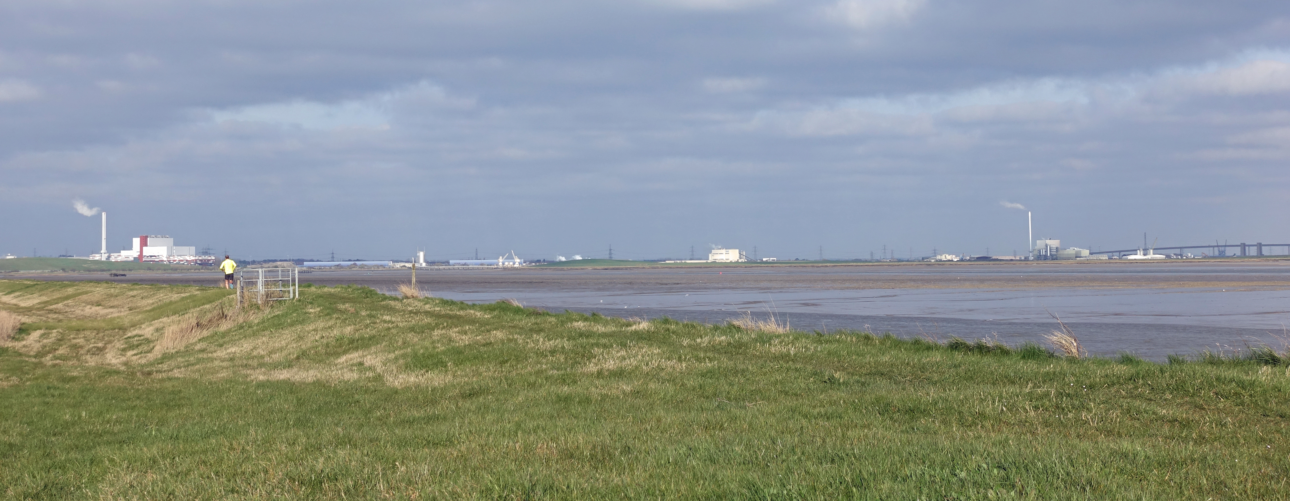 I completely failed to notice the trail runner until he was past me, so engrossed with watching a Common Seal leisurely following the rising tide, and a group of restless Curlews on the marshes inland