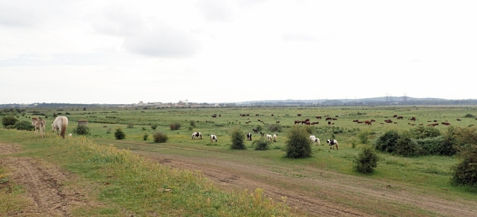 Rough pasture between Gravesend and Cliffe