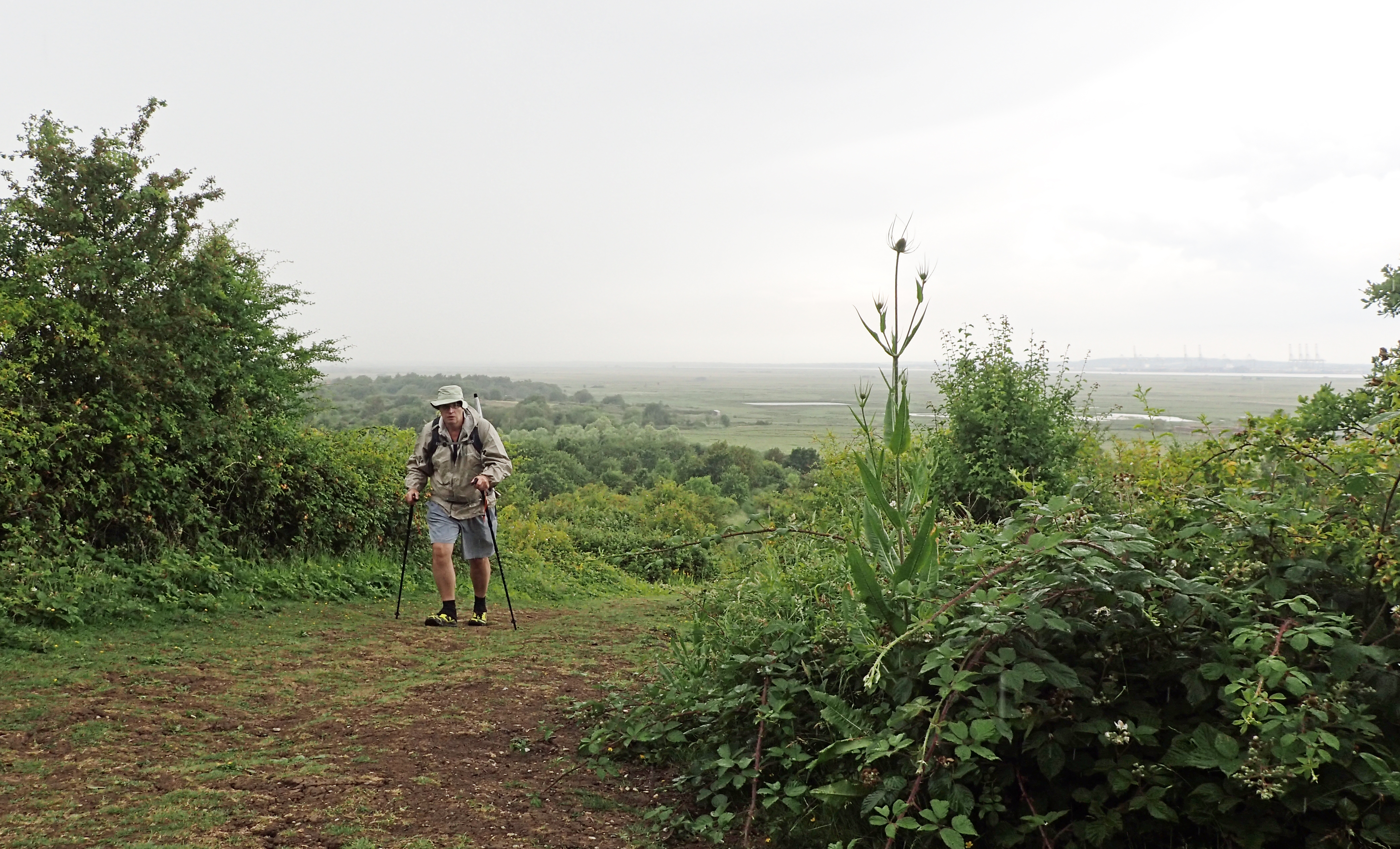 Climbing up through the rain to the national nature reserve at Northward Hill