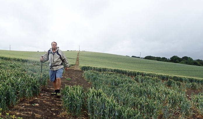 Sopping cereal crops on the slopes at Lower Halstow