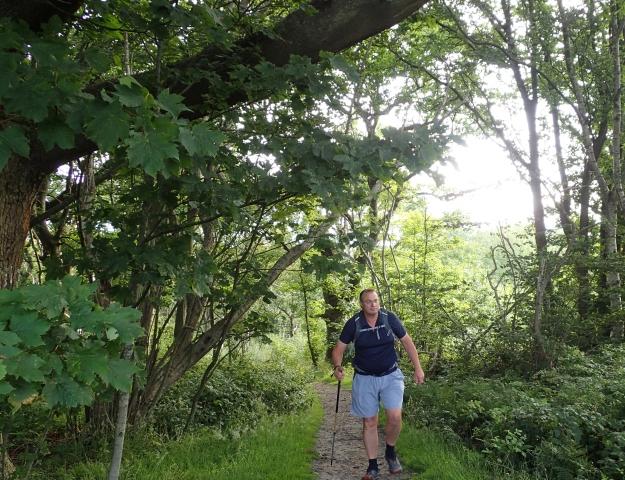 Woodlands approaching Pedlinge