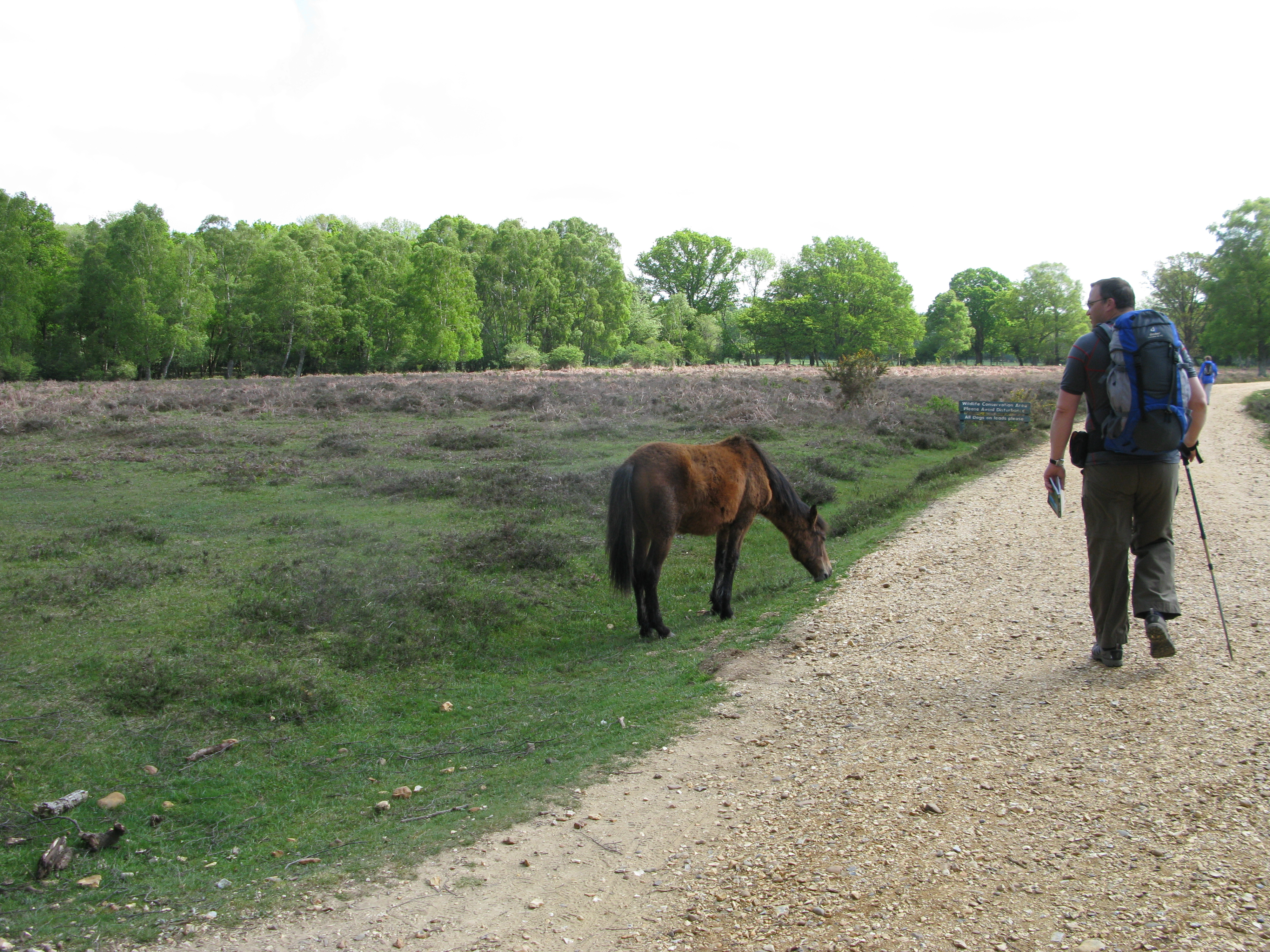 New Forest ponies are seen on every day