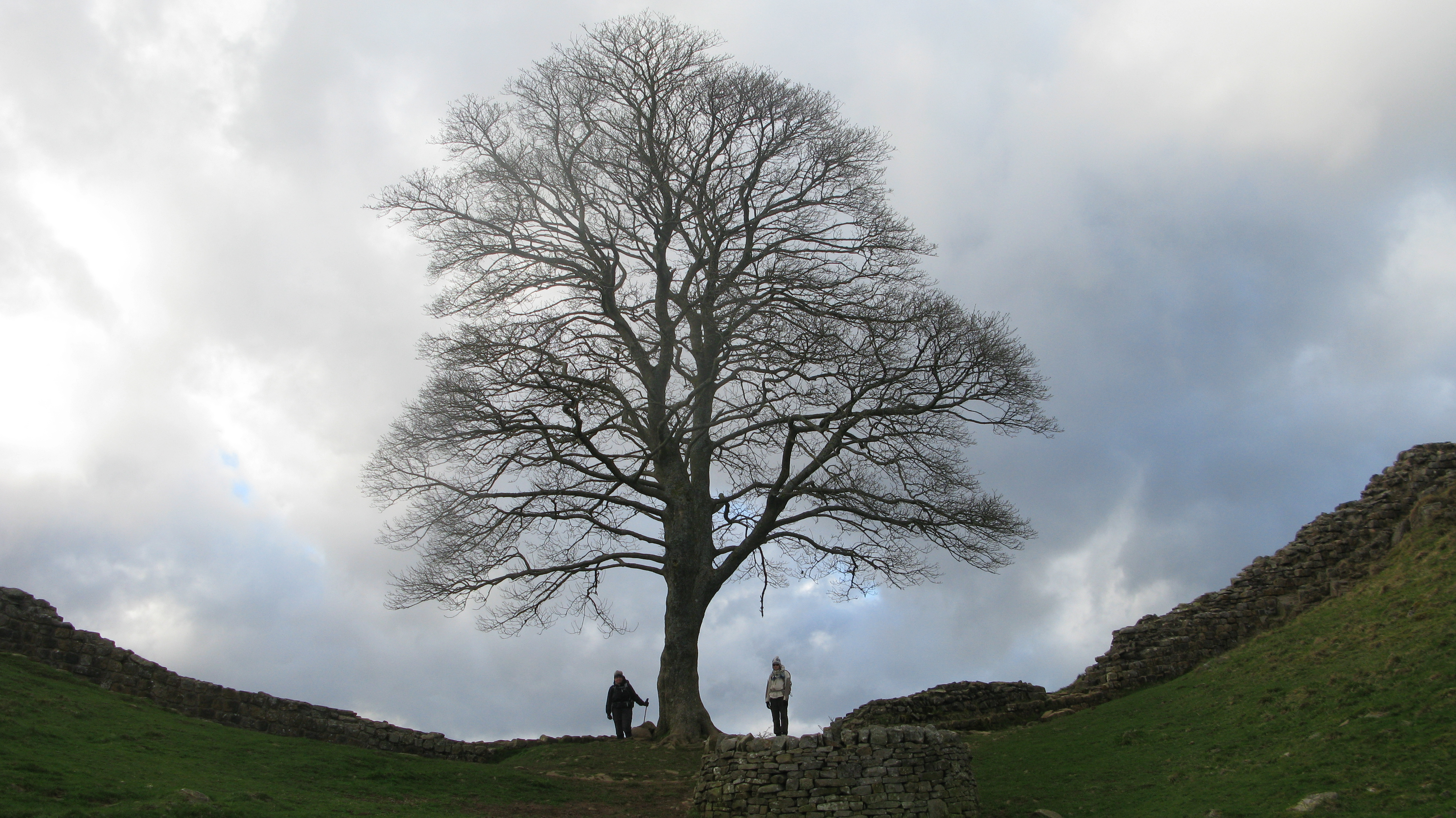 Sycamore Gap. Is this the most photographed point on Hadrian's Wall? Mrs and Miss Three Points of the Compass had to join the club