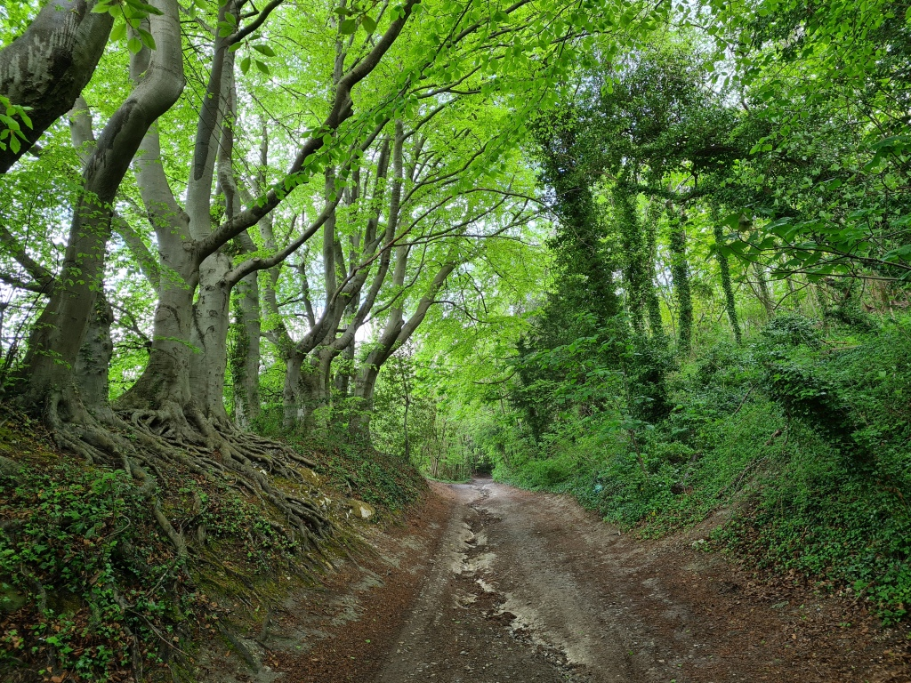 Climbing through ancient sunken lane to join the North Downs Way at the top