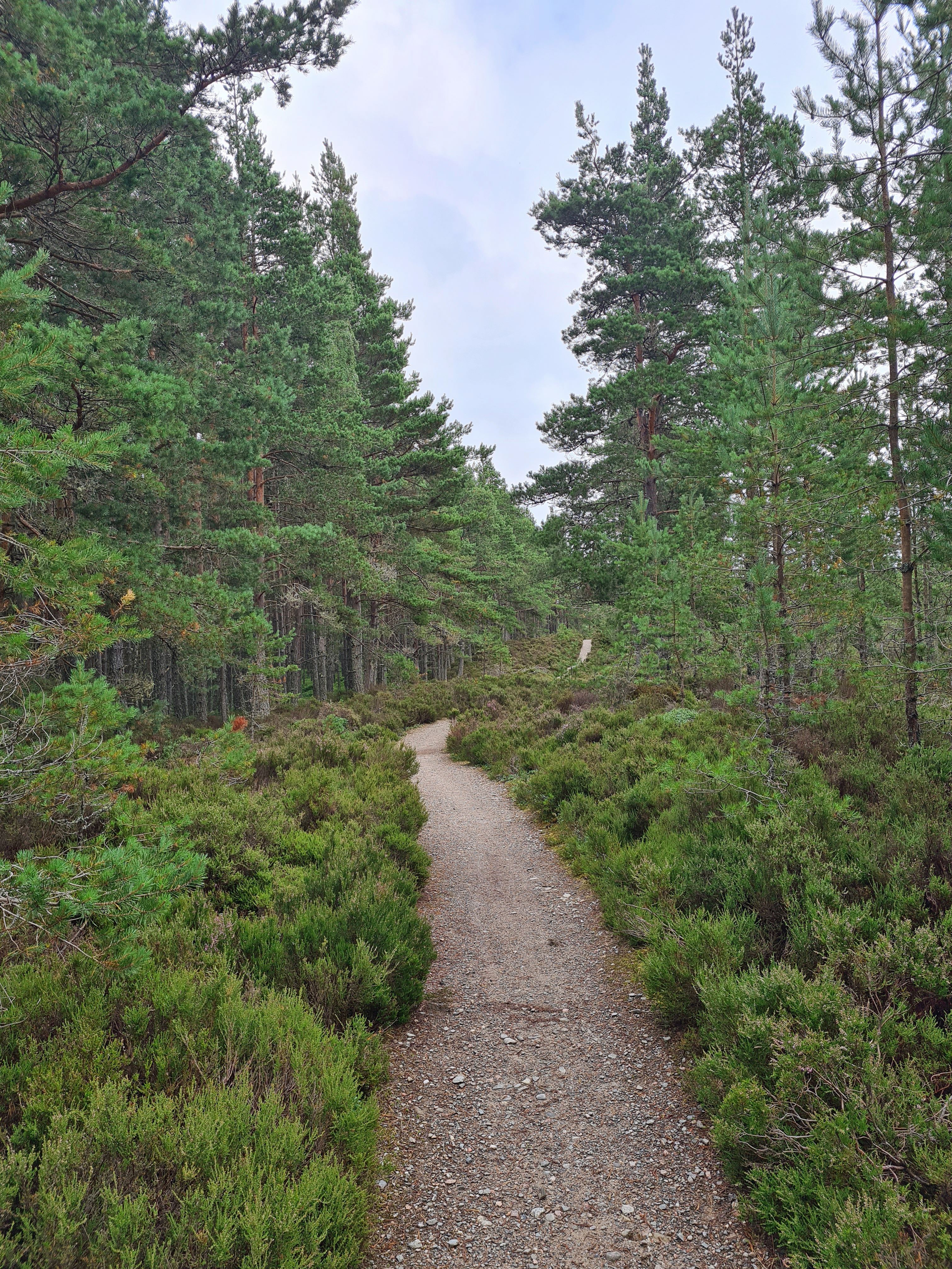 Abernathy National Nature Reserve