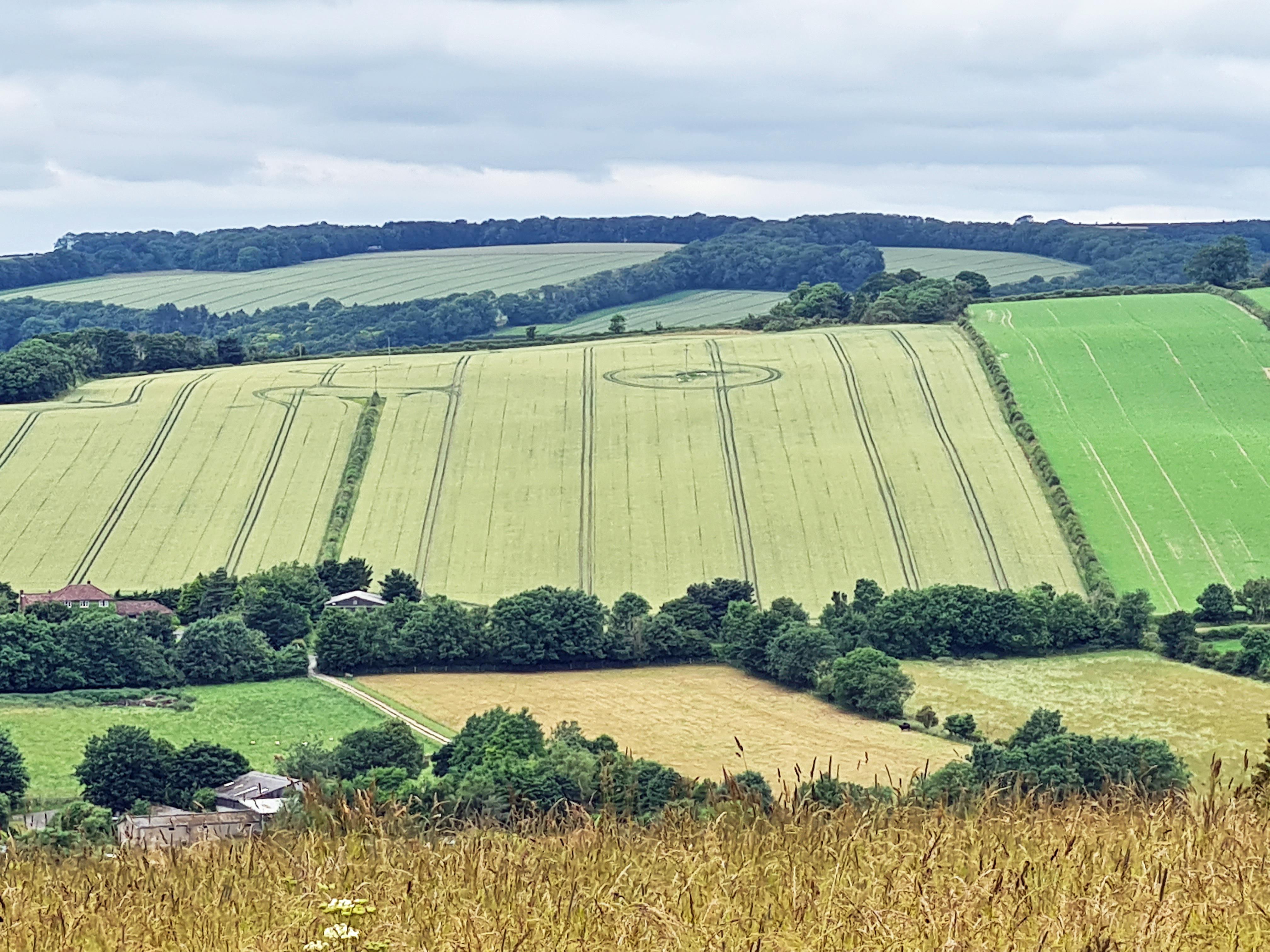 'crop circles'