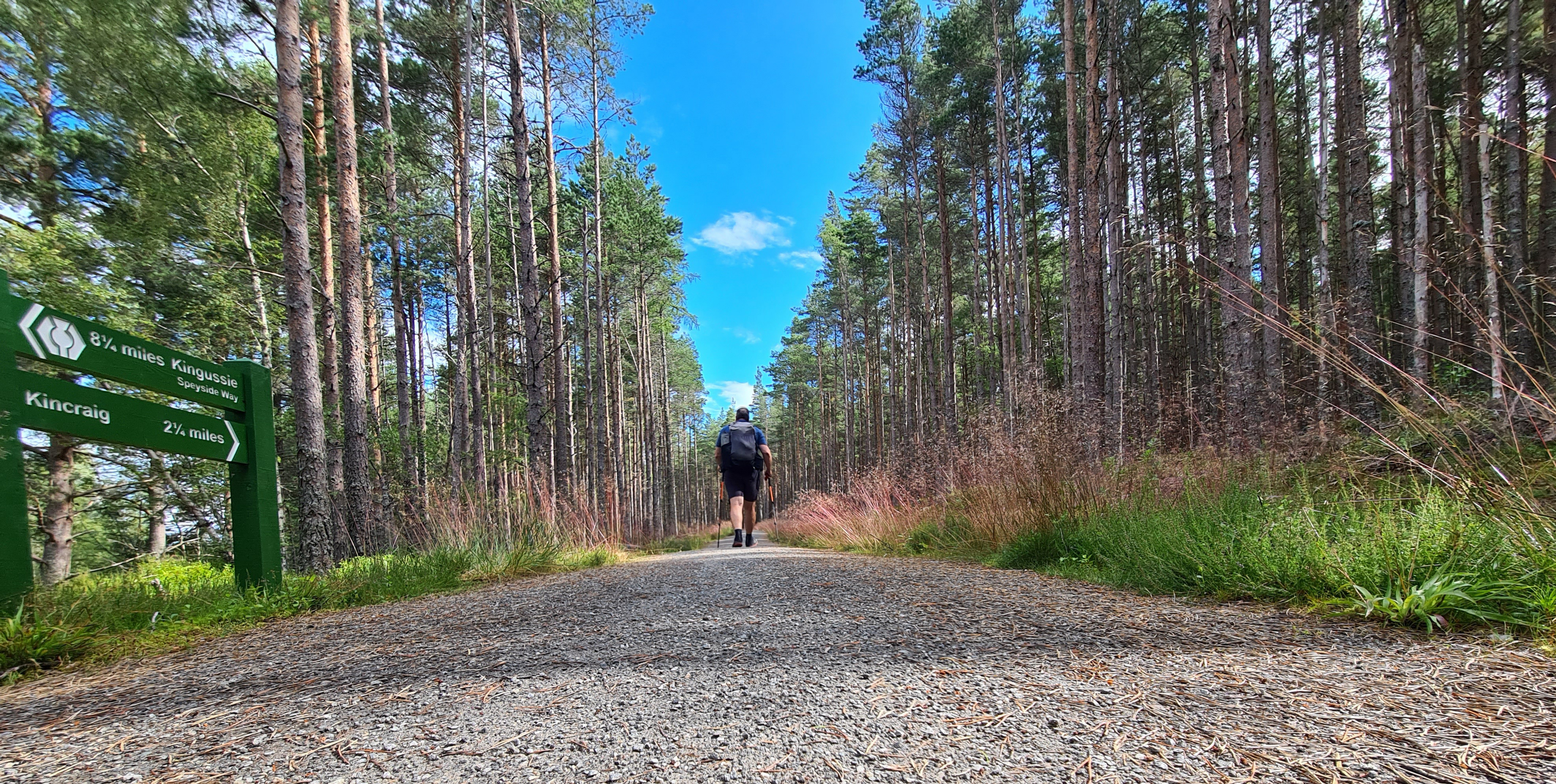 The Speyside Way entails a lot of forest walking or following the trackbed of a long-gone railway
